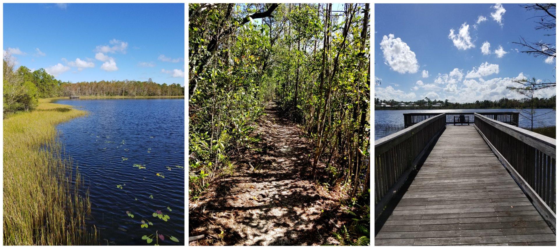 Three images in a row, the first is of the shoreline of Gator Lake, the middle is of the dirt surface of Eagle Trail, and the right is of the fishing dock